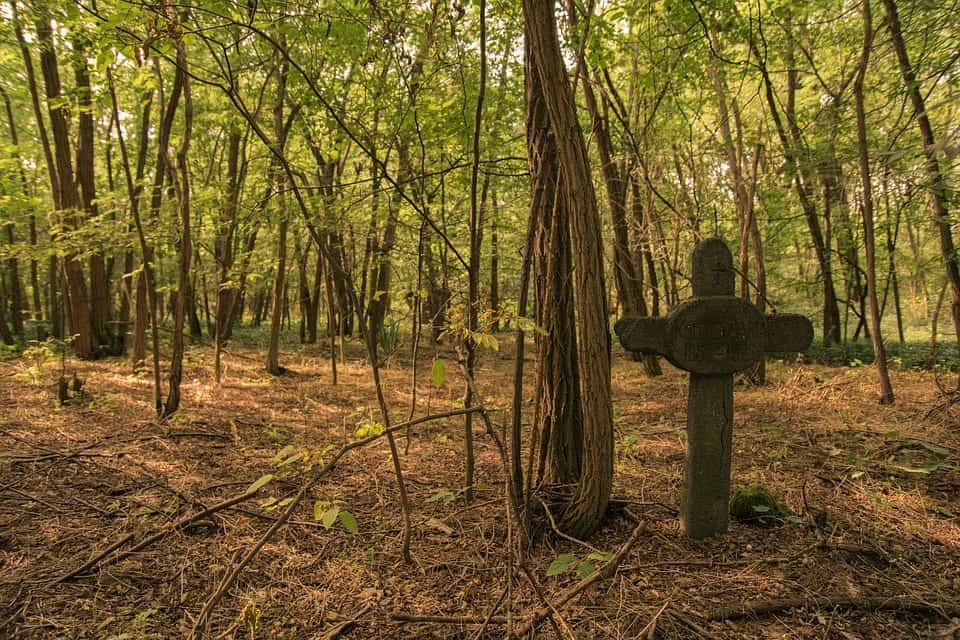 An old, crucifix-shaped grave stone stands in a green forest.
