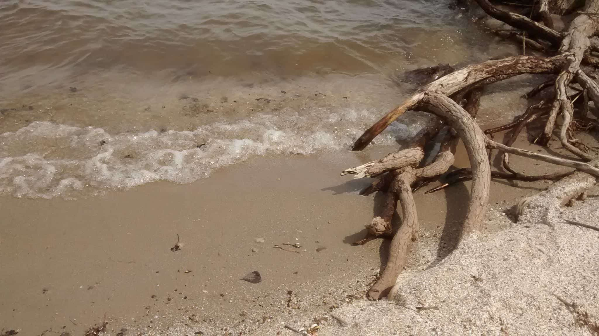 A small wave washes up on a sandy beach, with some driftwood nearby.