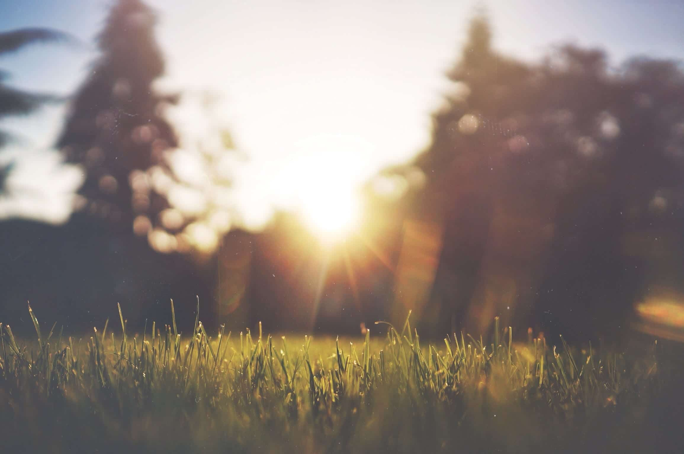 Soft focus shot of grass and trees with morning sun; image by Jake Givens, via Unsplash.com.