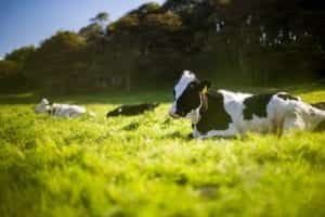 Veterinarians Lose Their Case Against Dairy Company