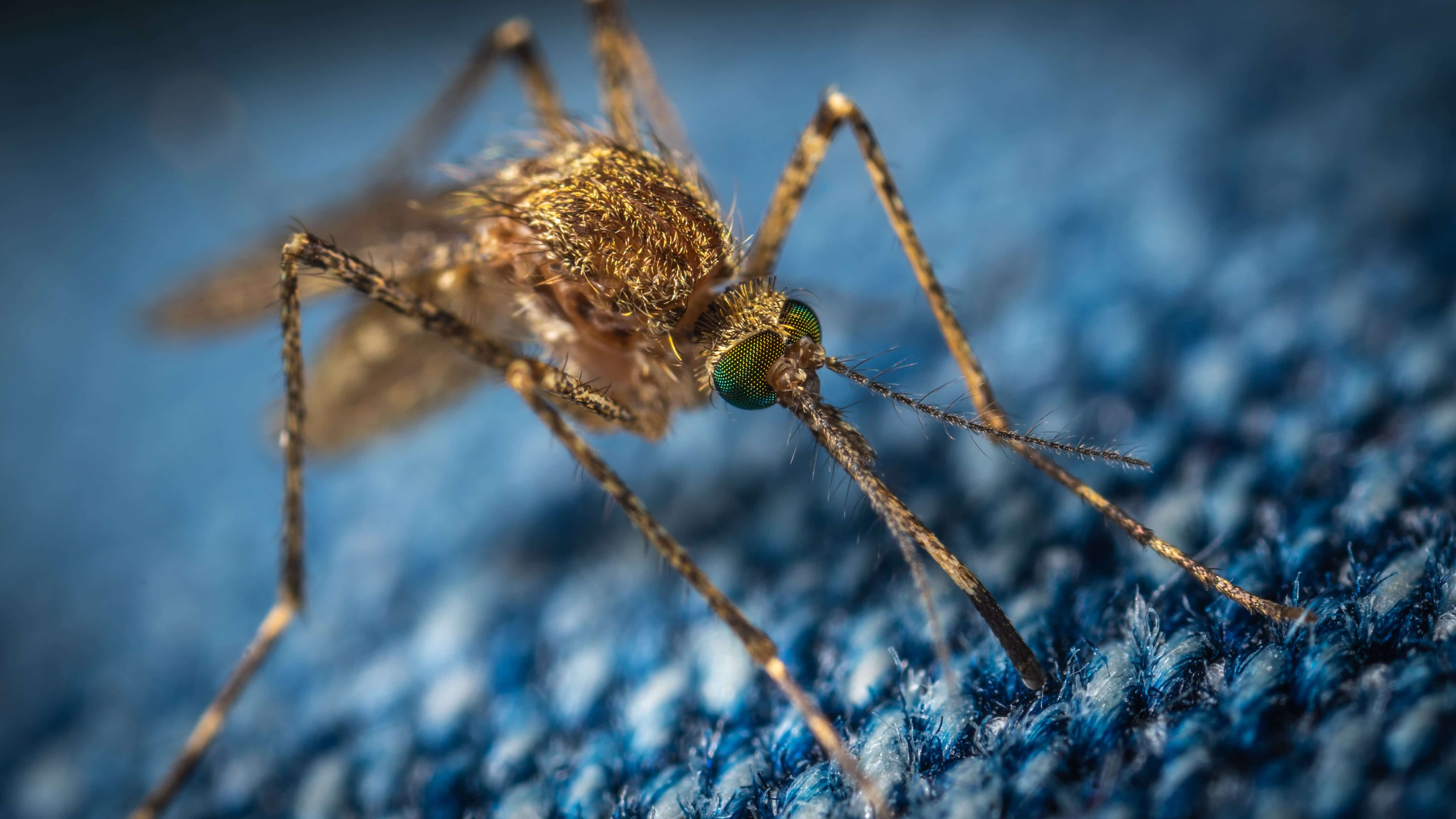 Deadly Mosquito Virus Spreads Across Michigan