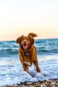 Dog running on beach; image by Oscar Sutton, via Unsplash.com.