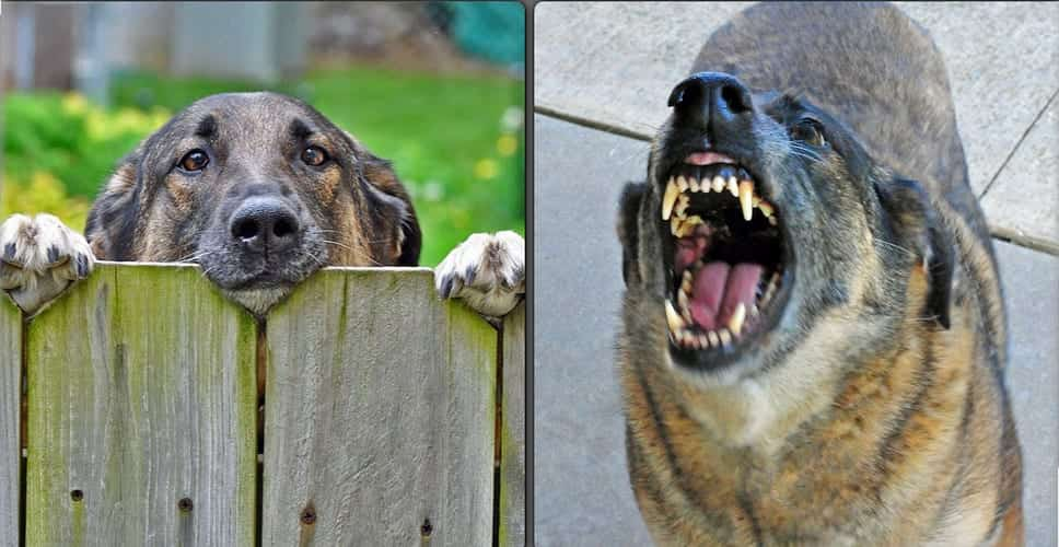 Two panel image - cute dog poking its head over fence (left) & same dog barking and showing its teeth (right); image by State Farm, via Flickr, CC BY 2.0, no changes.