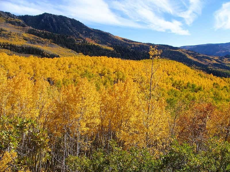 Fishlake National Forest, Utah